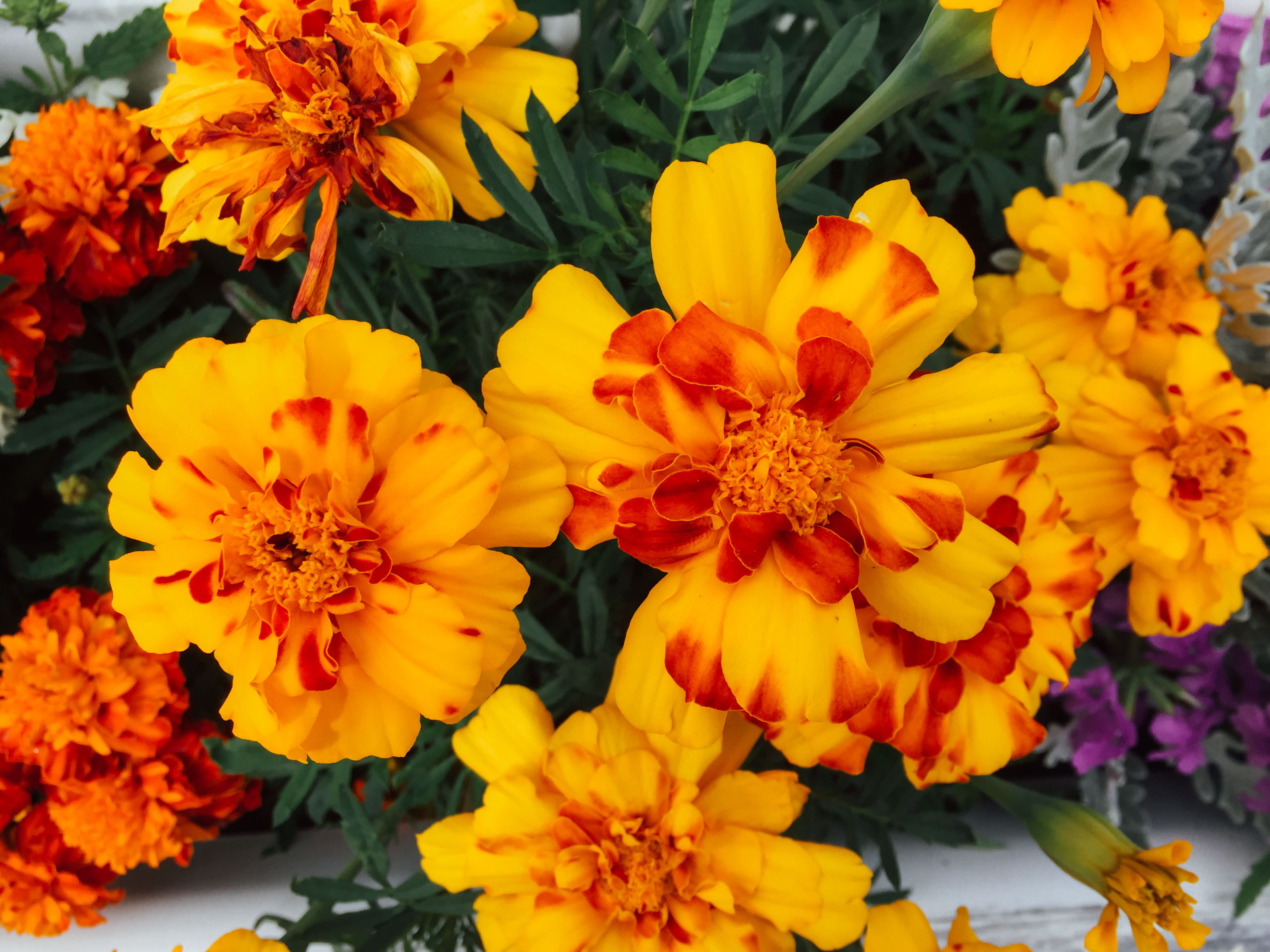 Yellow And Orange Flowers Mmt