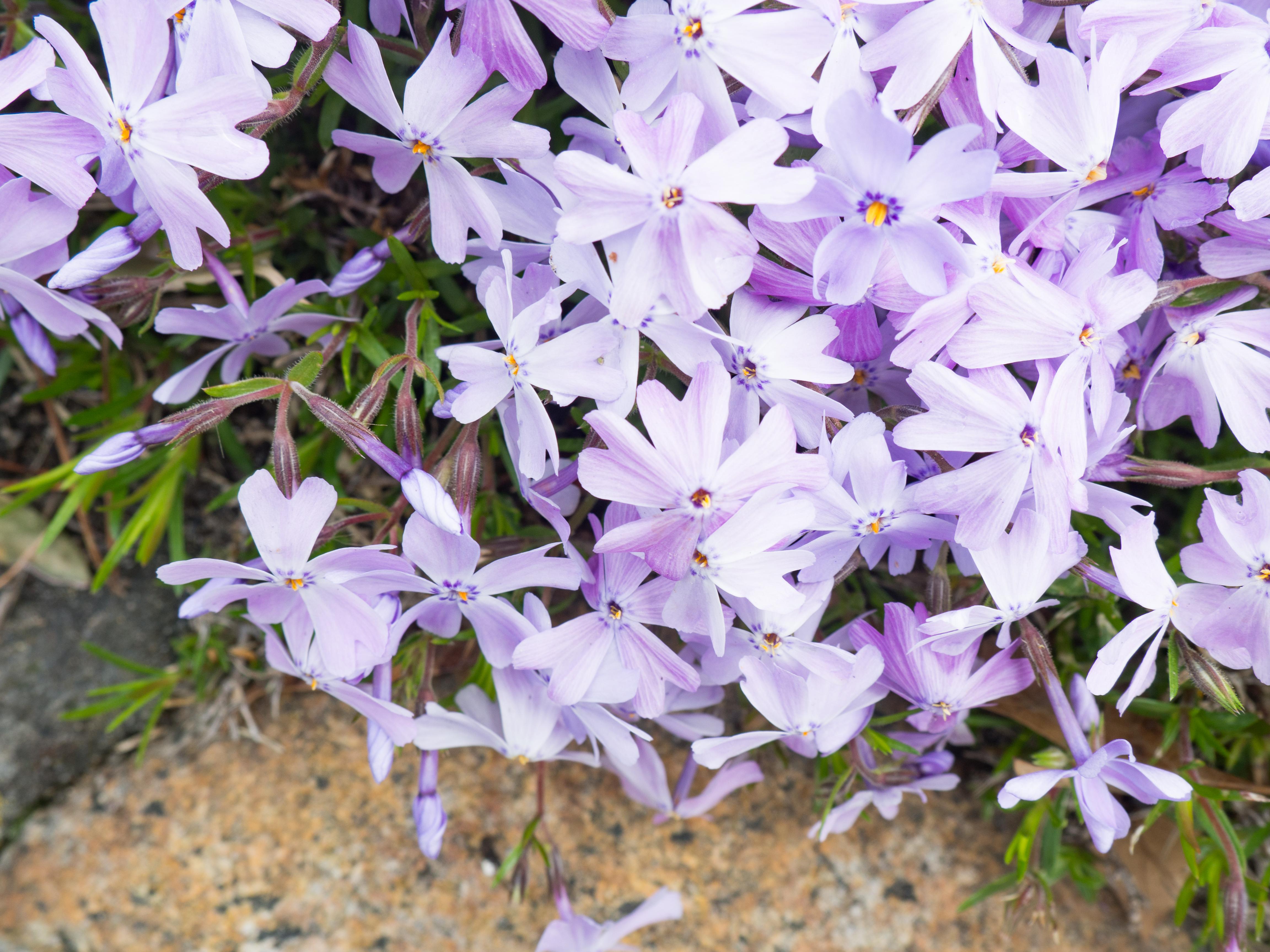Purple & White Flowers – MMT